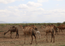 Camel fibre comes from camels deborah-dunbar-4XhcUYCDzGg-unsplash